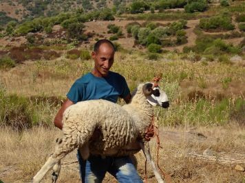Xan's brother and the sheep